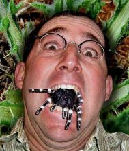 Man Eating Spider