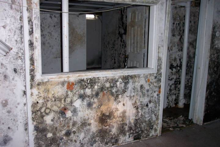 Mold Growing at Rapid Rate